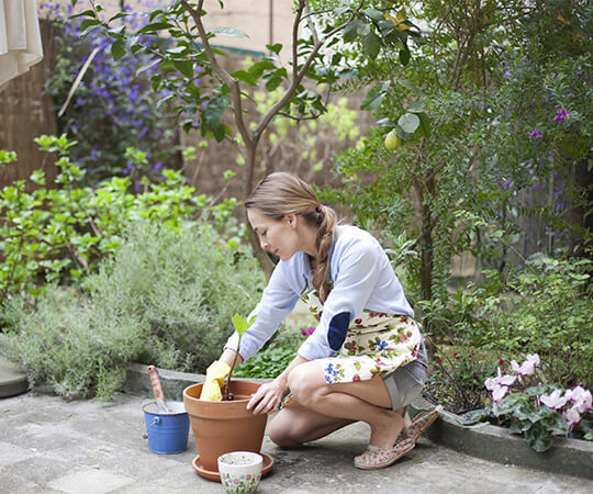 avoid these 7 beginning gardening mistakes